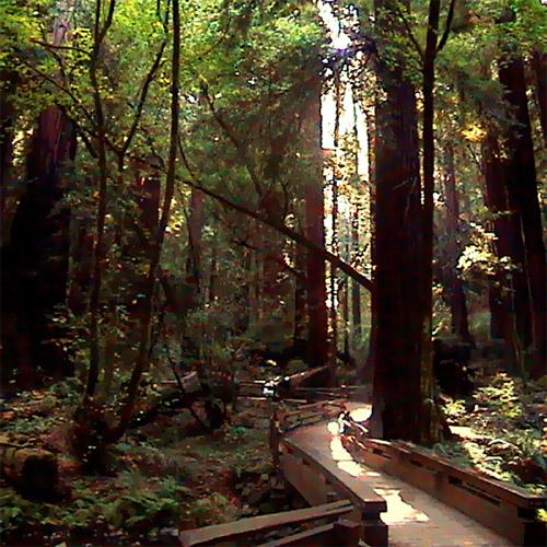 Muir Woods - Note 6