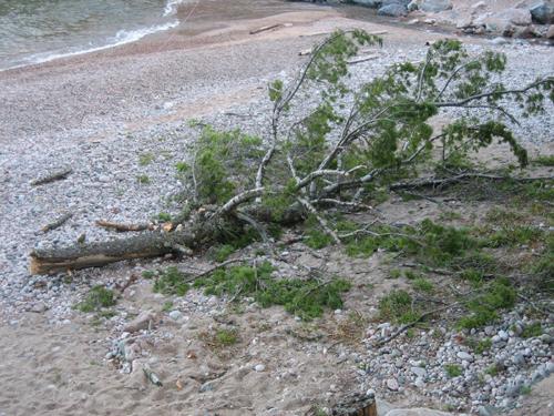 tree top 1