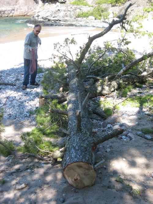tree top 2