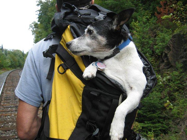 Skipper in daypack