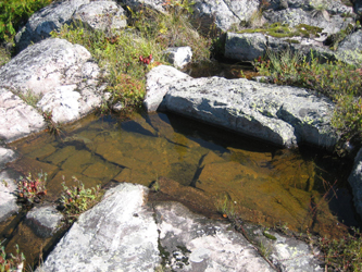 Pool on the rocks